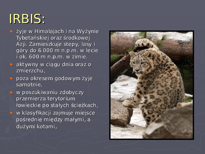 Państwa zwierzęce - palearktyka i nearktyka - Slajd 25