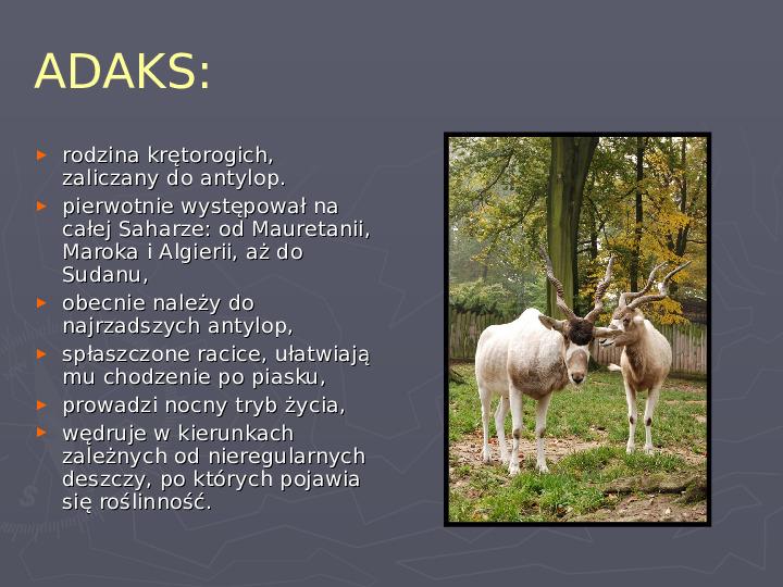 Państwa zwierzęce - palearktyka i nearktyka - Slajd 27