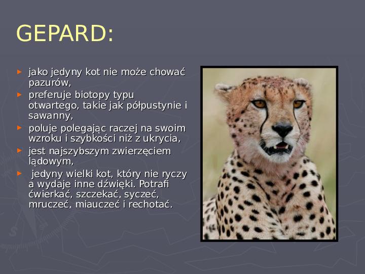 Państwa zwierzęce - palearktyka i nearktyka - Slajd 29