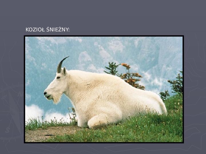 Państwa zwierzęce - palearktyka i nearktyka - Slajd 52