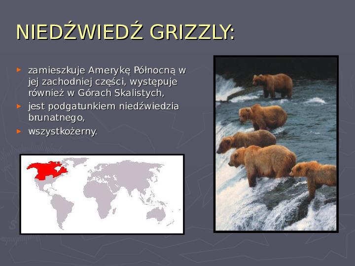 Państwa zwierzęce - palearktyka i nearktyka - Slajd 56