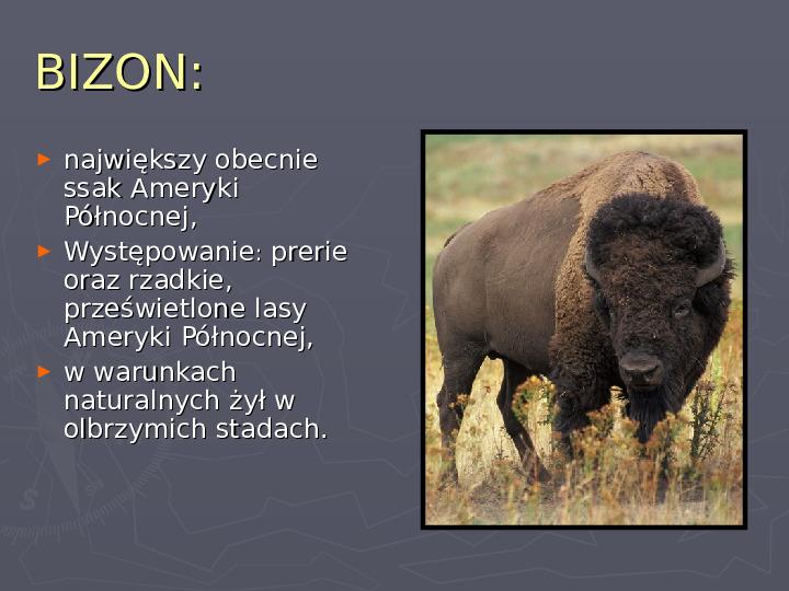 Państwa zwierzęce - palearktyka i nearktyka - Slajd 59
