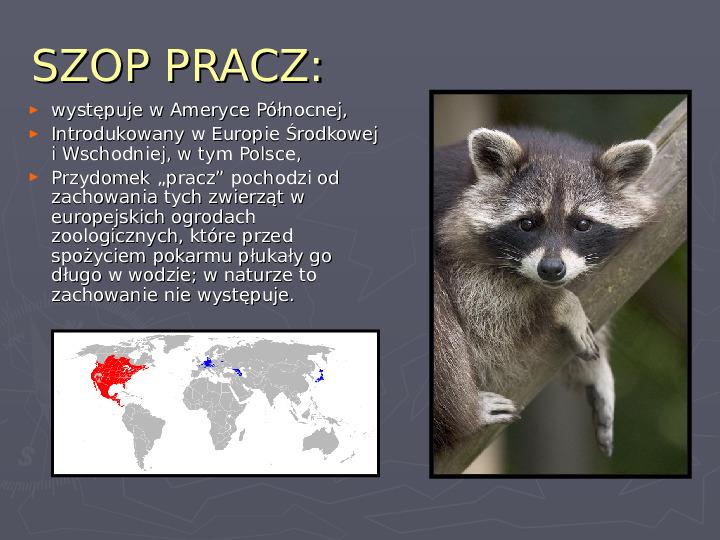 Państwa zwierzęce - palearktyka i nearktyka - Slajd 62