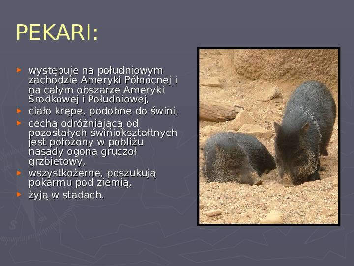 Państwa zwierzęce - palearktyka i nearktyka - Slajd 64