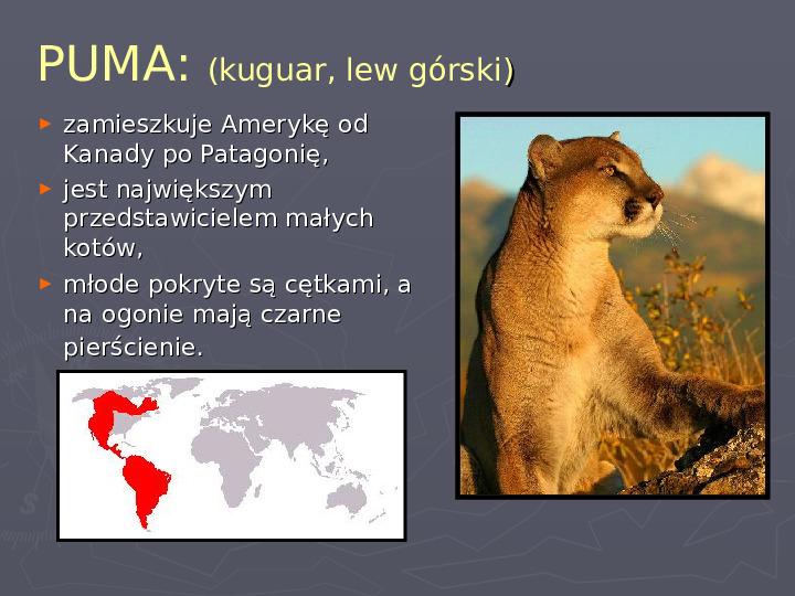 Państwa zwierzęce - palearktyka i nearktyka - Slajd 65