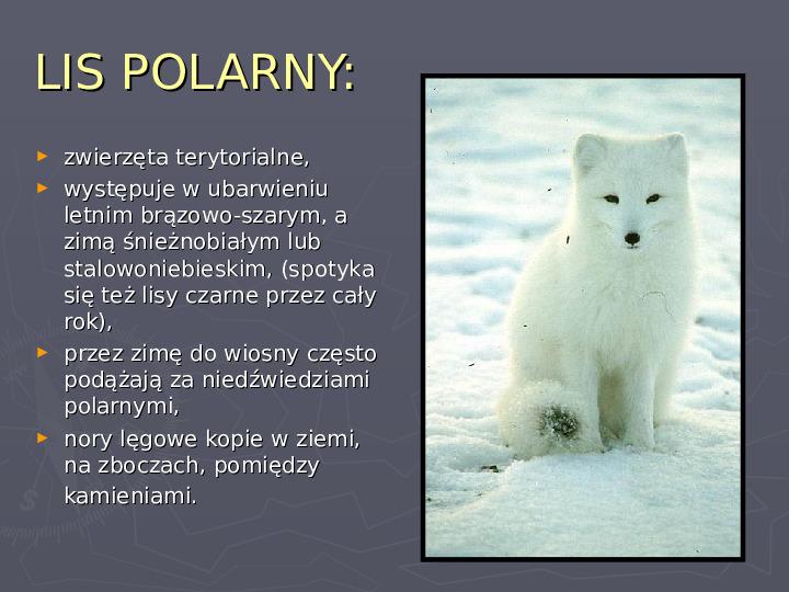 Państwa zwierzęce - palearktyka i nearktyka - Slajd 75
