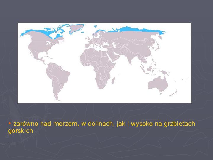 Państwa zwierzęce - palearktyka i nearktyka - Slajd 76