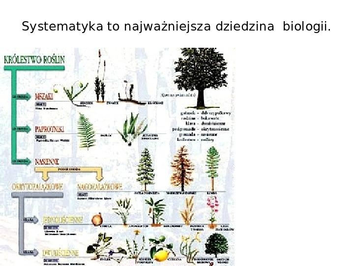 Porządkujemy świat organizmów - Slajd 7