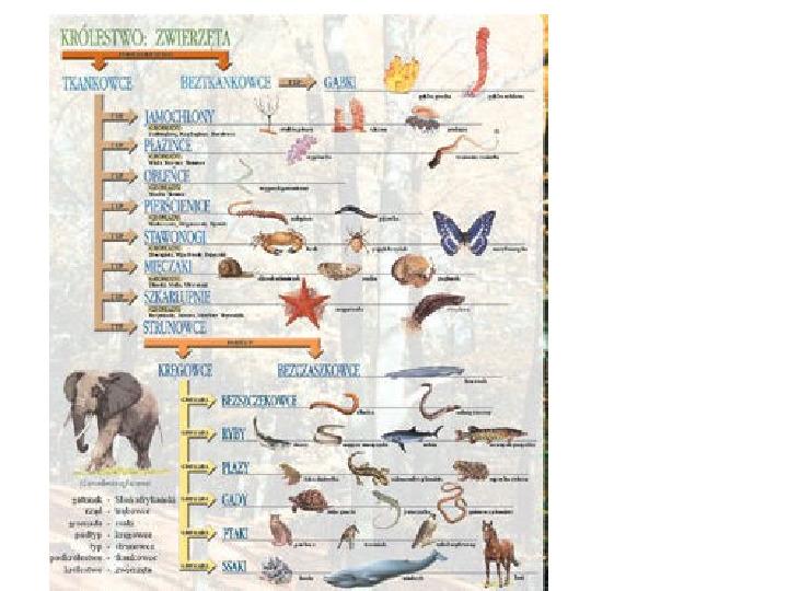 Porządkujemy świat organizmów - Slajd 8
