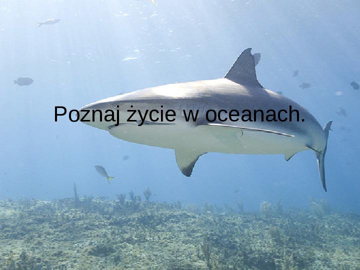 Poznaj życie w oceanach - Slajd 1
