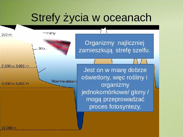 Poznaj życie w oceanach - Slajd 2