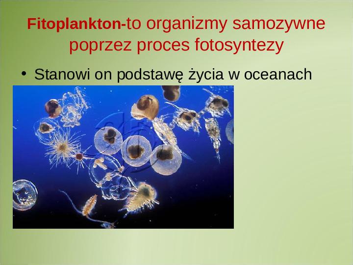 Poznaj życie w oceanach - Slajd 5