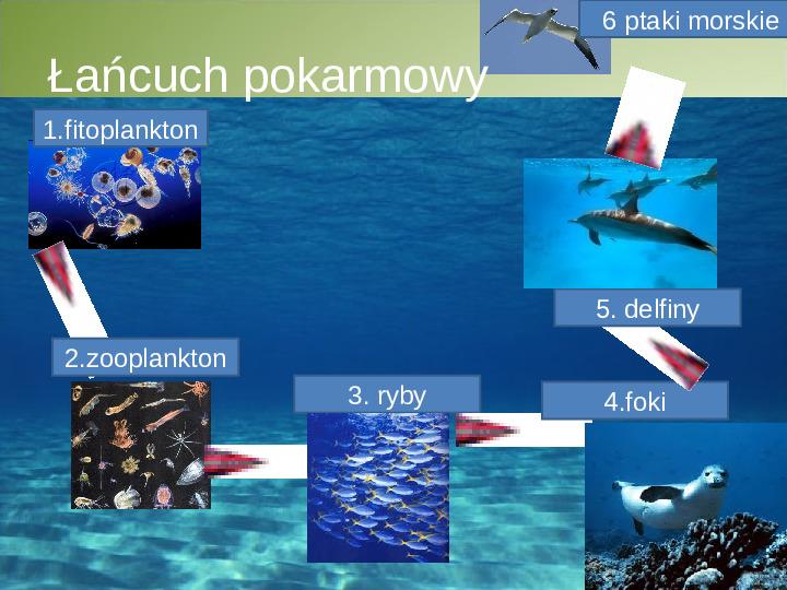 Poznaj życie w oceanach - Slajd 7