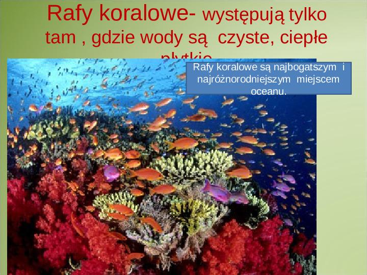 Poznaj życie w oceanach - Slajd 8
