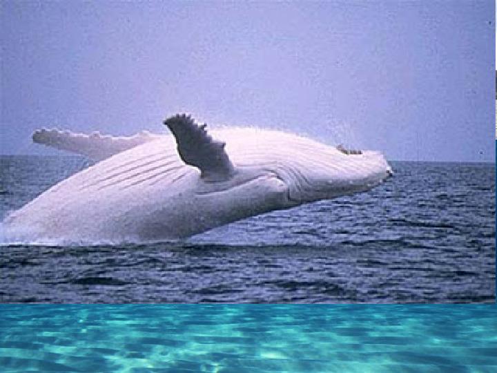 Poznaj życie w oceanach - Slajd 13