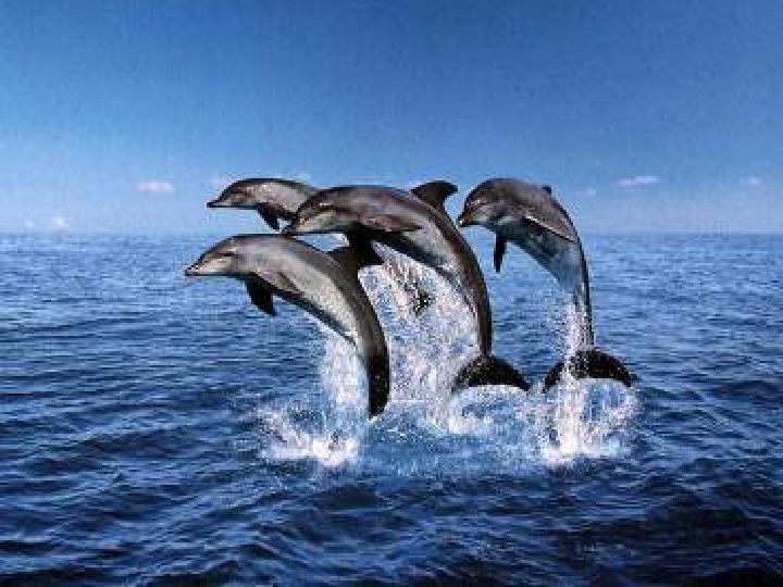 Poznaj życie w oceanach - Slajd 18