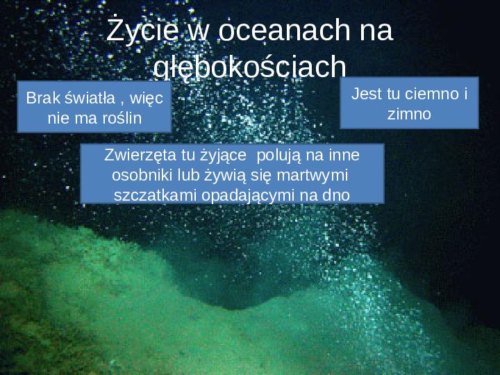 Poznaj życie w oceanach - Slajd 19