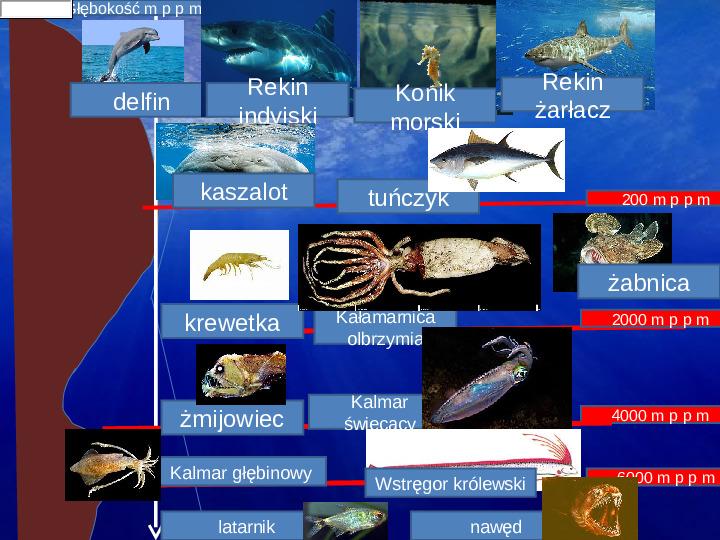 Poznaj życie w oceanach - Slajd 22
