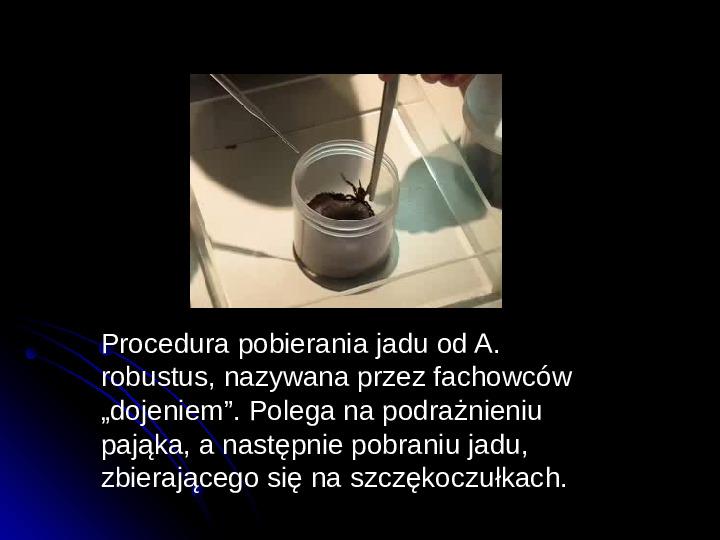 Pajęczaki - Slajd 12