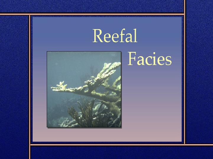Reefal facies - Slajd 1