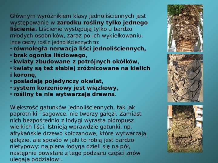 Rośliny okrytozalążkowe jednoliścienne - Slajd 1