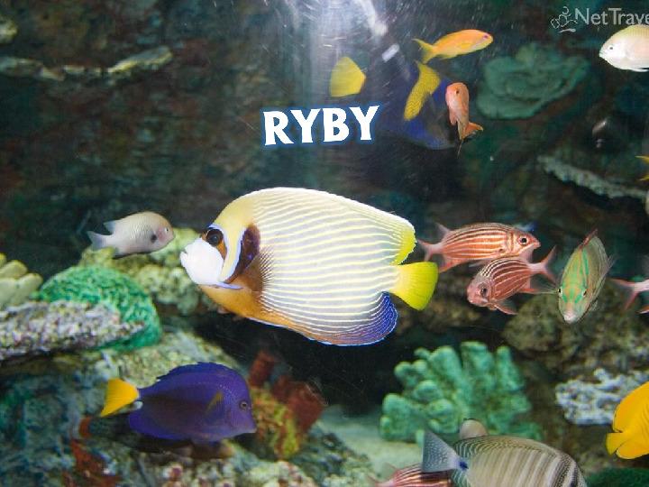 Ryby - Slajd 1