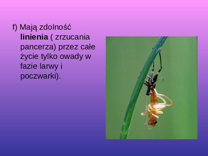 Skorupiaki i pajęczaki - Slajd 3