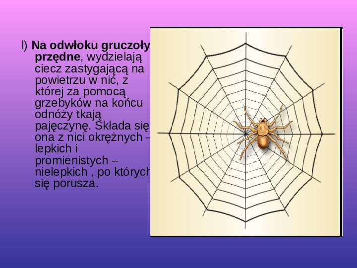 Skorupiaki i pajęczaki - Slajd 26