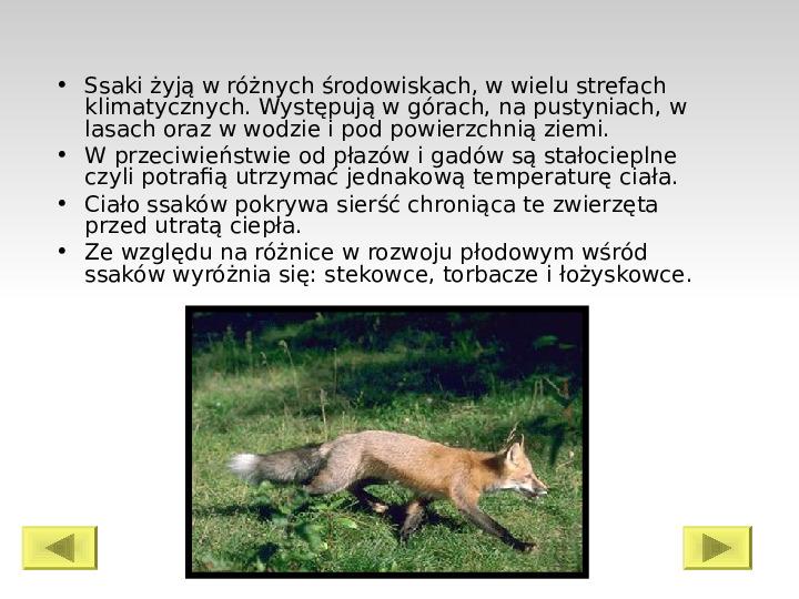 Świat ssaków - Slajd 1