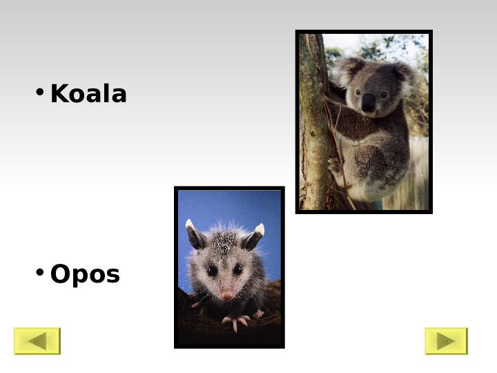 Świat ssaków - Slajd 6