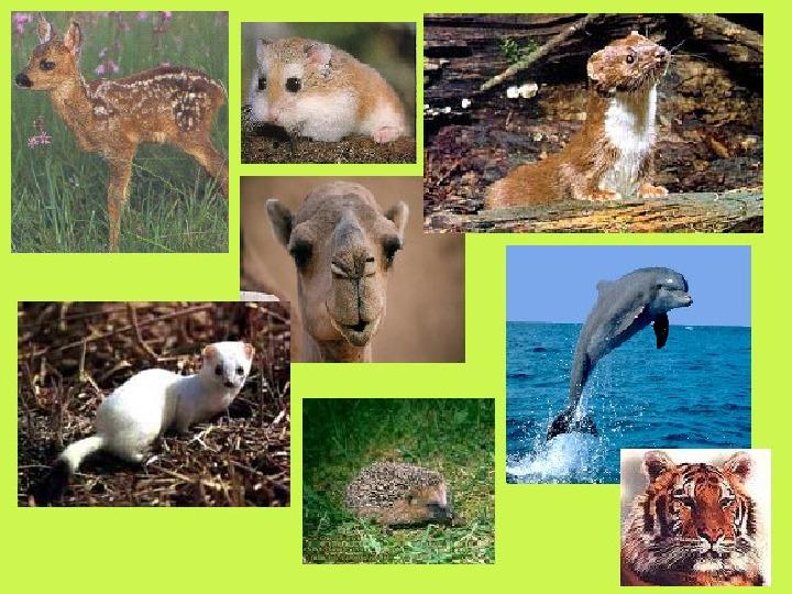 Świat ssaków - Slajd 22