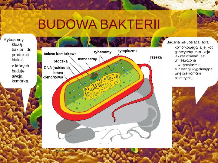 Tajemnice bakterii - Slajd 3