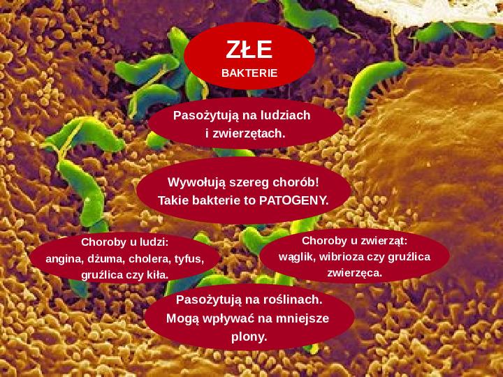 Tajemnice bakterii - Slajd 5