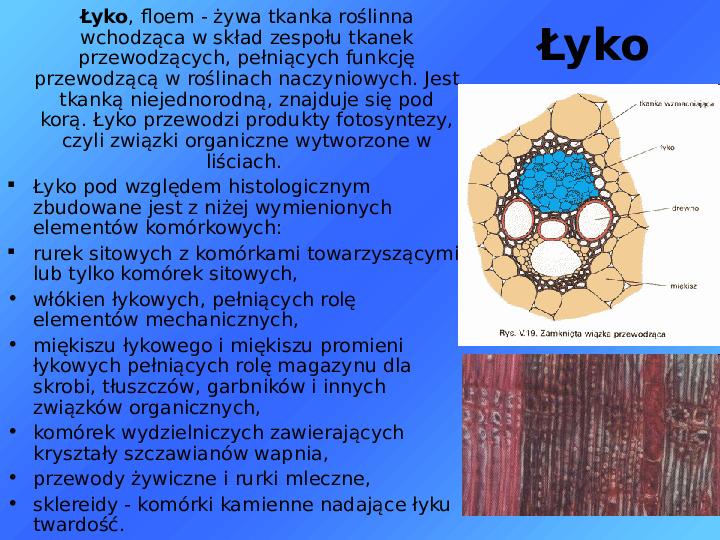 Tkanki - Slajd 28