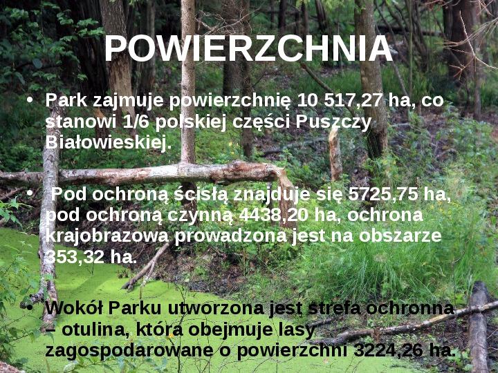 Białowieski Park Narodowy - Slajd 3