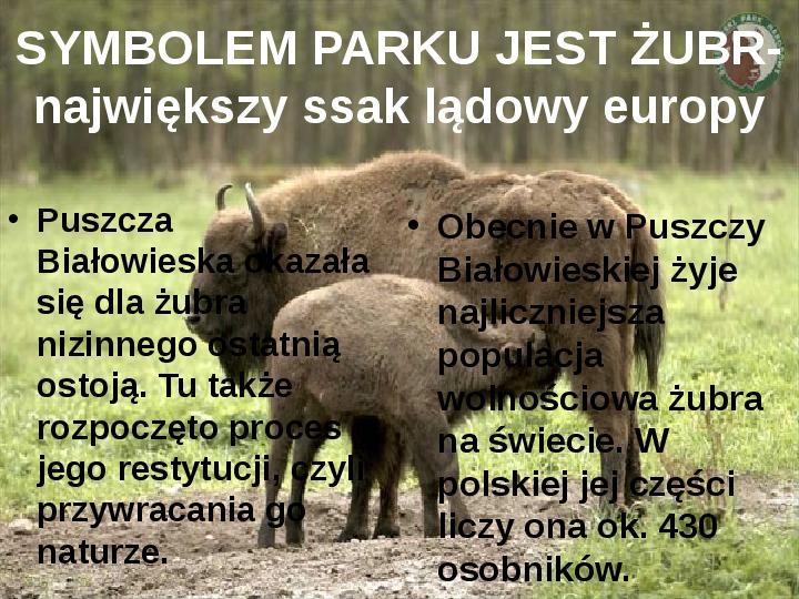 Białowieski Park Narodowy - Slajd 5