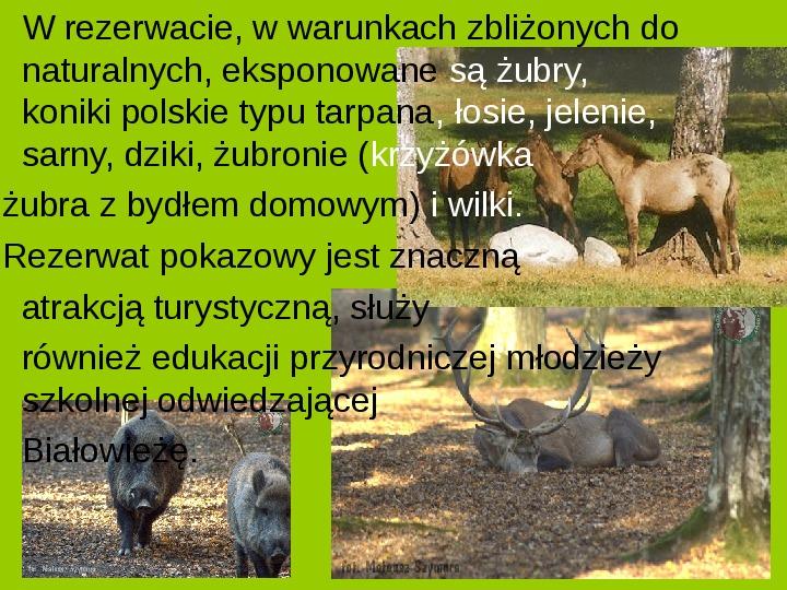 Białowieski Park Narodowy - Slajd 6