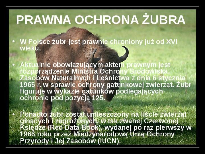 Białowieski Park Narodowy - Slajd 7