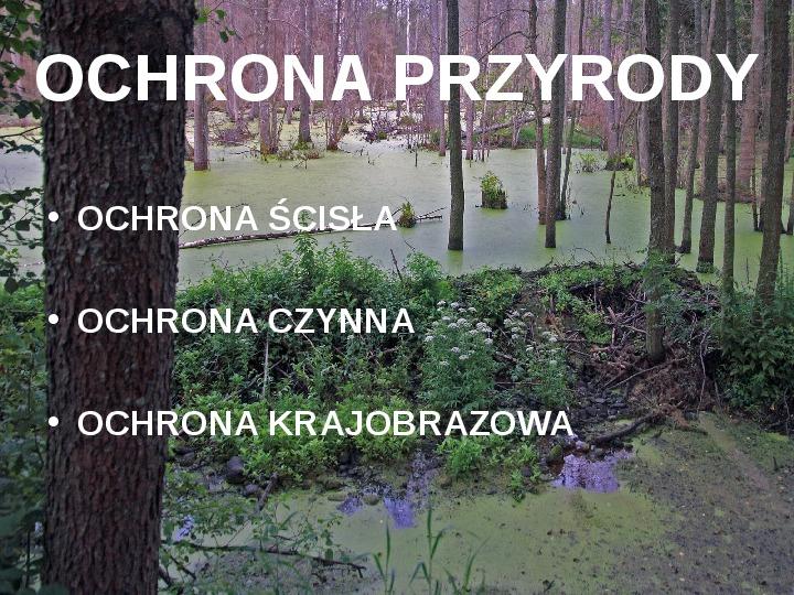 Białowieski Park Narodowy - Slajd 8