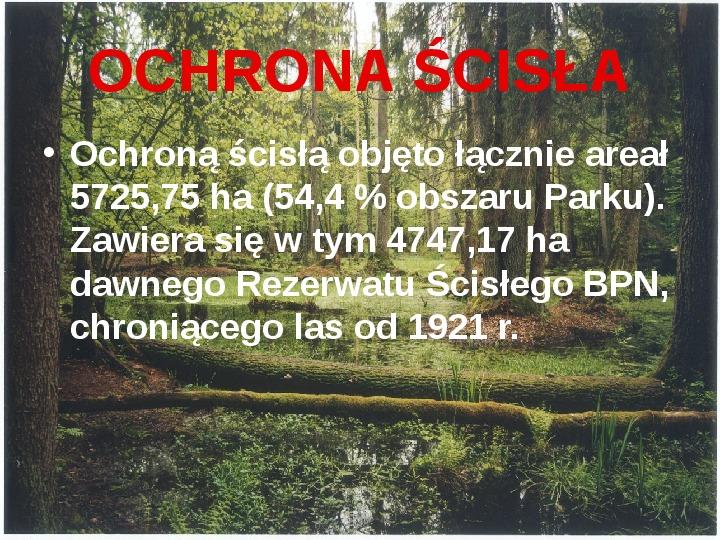 Białowieski Park Narodowy - Slajd 9