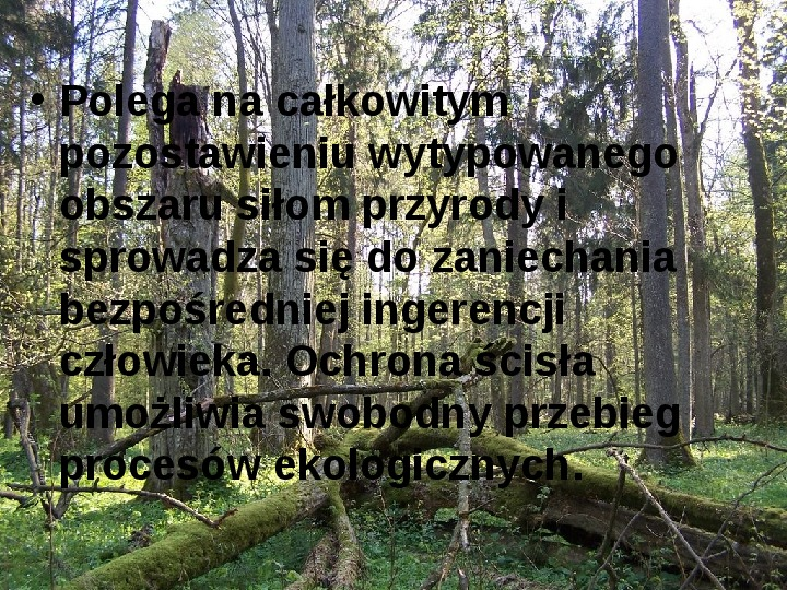 Białowieski Park Narodowy - Slajd 10