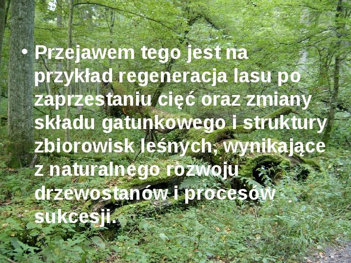Białowieski Park Narodowy - Slajd 11