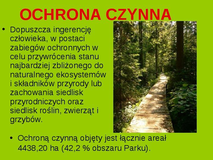 Białowieski Park Narodowy - Slajd 12