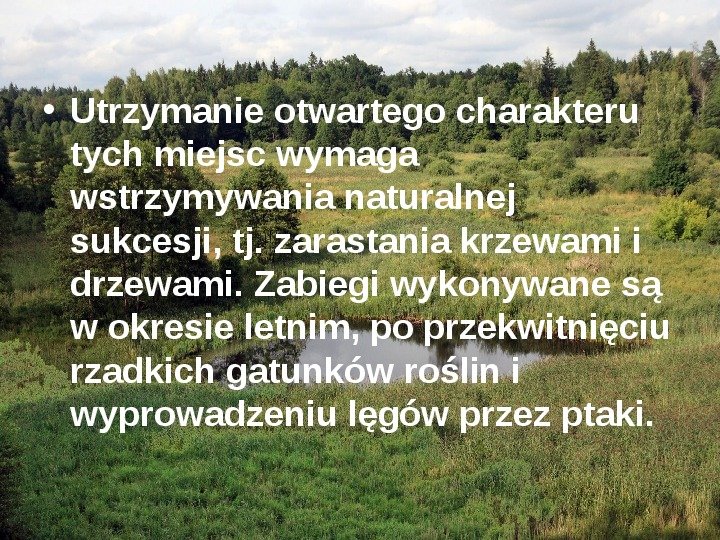 Białowieski Park Narodowy - Slajd 13