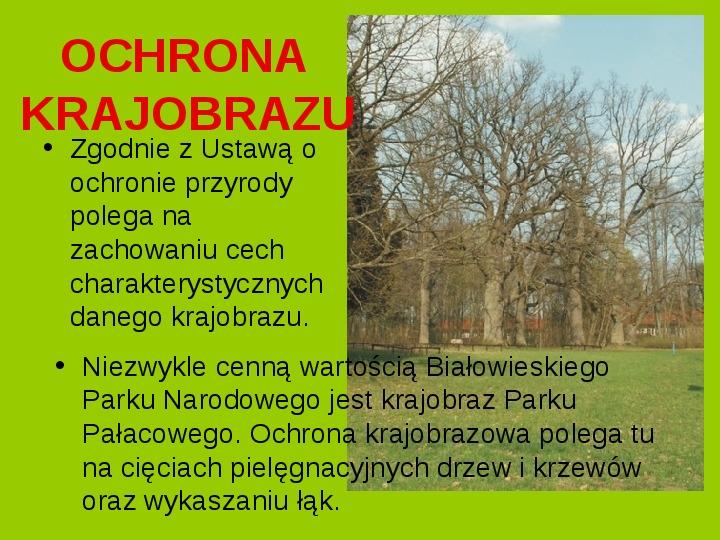 Białowieski Park Narodowy - Slajd 14