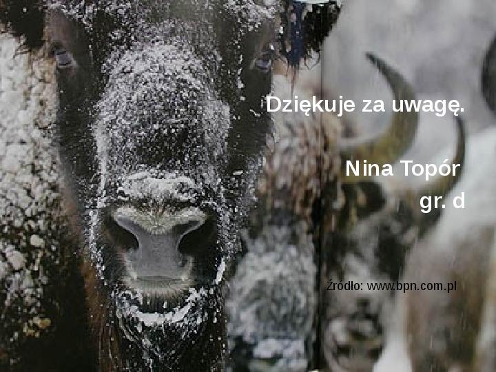 Białowieski Park Narodowy - Slajd 16