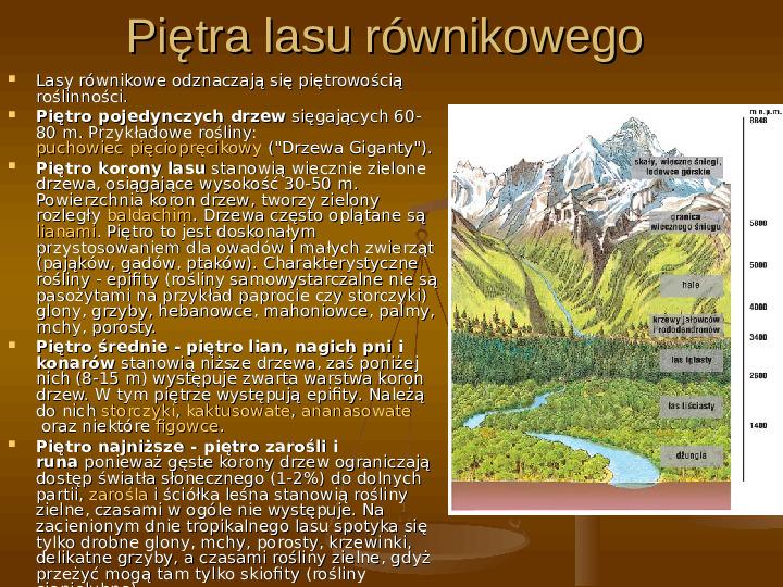 Wilgotny las równikowy - Slajd 8