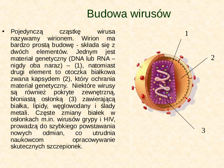 Wirusy - Slajd 5