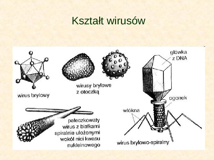 Wirusy - Slajd 7