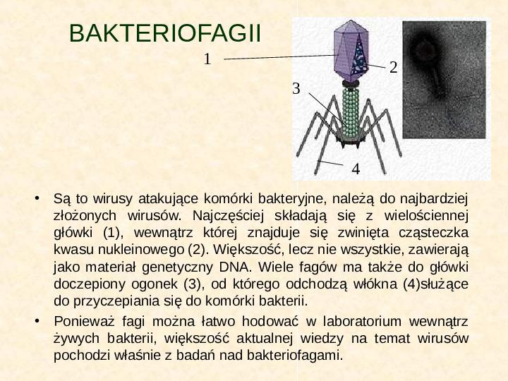 Wirusy - Slajd 8